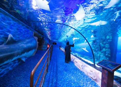 Dubai Aquarium's shark exhibition