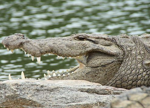 Dubai Crocodile Park to open by the end of the year