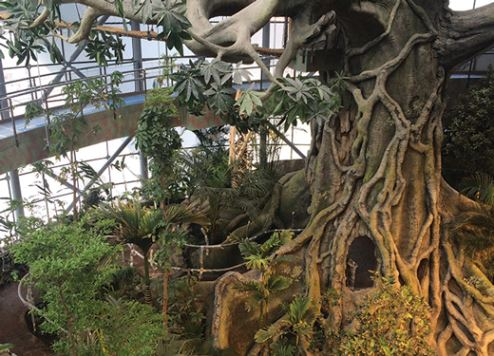 New Tropical Rainforest Opens In Dubai