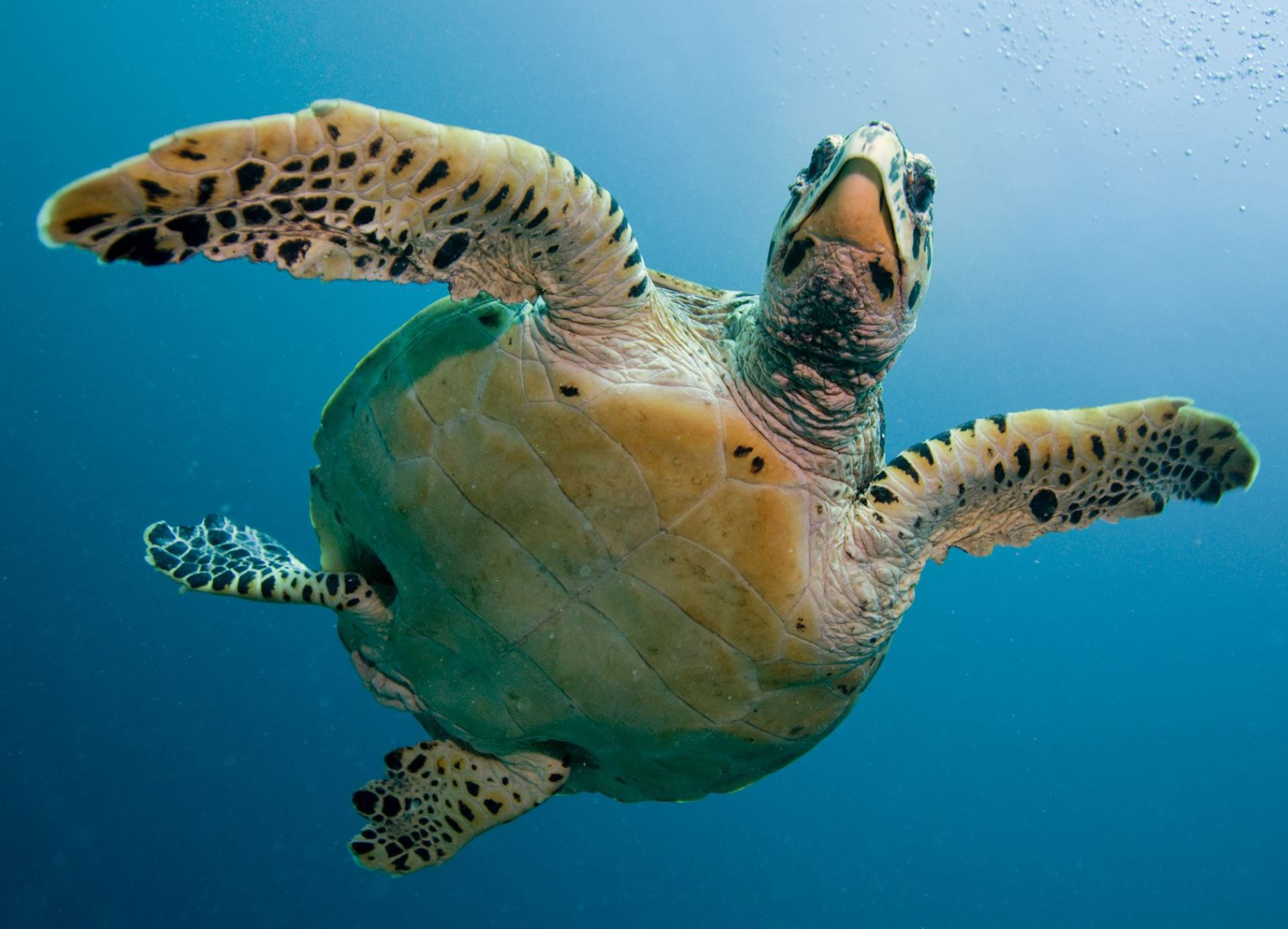 Jumeirah rehabilitates 75 sea turtles from its new hotel lagoon